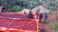 Äthiopien Guji Tero Farm Bio Kaffee