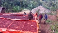 Äthiopien Guji Tero Farm Bio Espresso